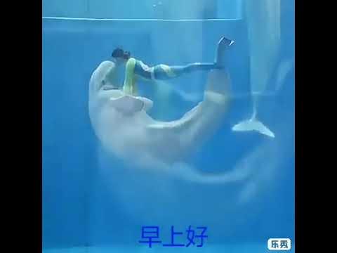 Удивительный танец белых дельфинов Белуха