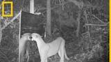 Los animales del Amazonas descubren sus reflejos en el espejo National Geographic en Espa