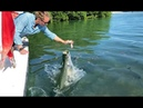 Coole Videos 394: 🐠🐟 Fütterung Der Fische / Feeding the Fish 🤦♂️    ✪ Stern DuTube