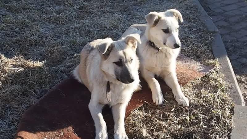 Мила и Сима
