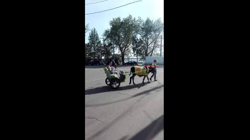 Ксюшенька в парке аттракционов 22 07 19 Первая поездка на живом ослике