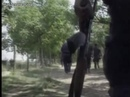 Prva Linija - Milicija Intro Loop