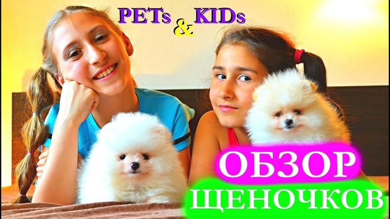 ОНИ СУПЕР КЛЁВЫЕ Наши милые щеночки )) | SWEET POMERANIAN PUPPY