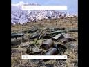 WWF TooLatergram EV