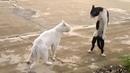 Приколы с животными кошкикошки приколы кошки смешныеживотные приколы 2014 про животных короткие