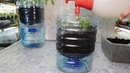 🍅ТОМАТЫ БЕЗ ПИКИРОВКИ И БЕЗ ПОЛИВА !!🍅 How to grow seedlings of tomatoes pat 2