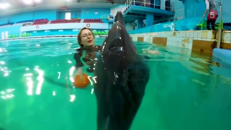 Как общаются дельфин и человек
