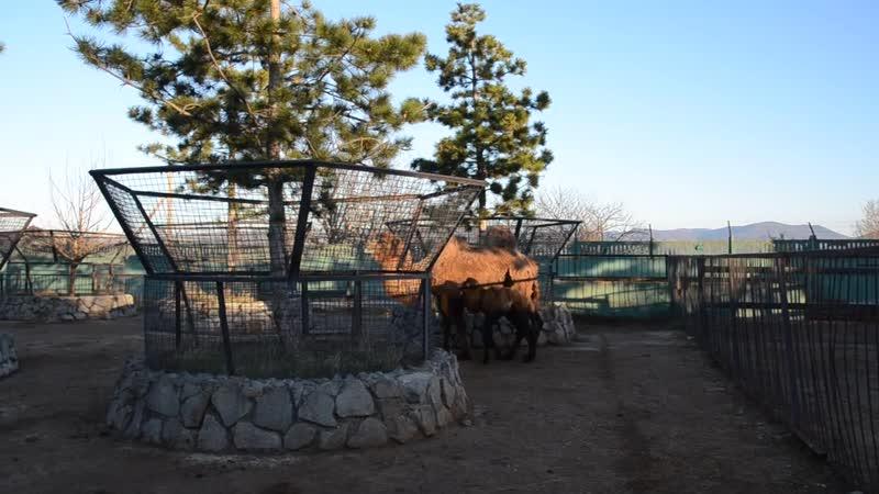 У Марго и верблюжонка Мартина все в порядке !