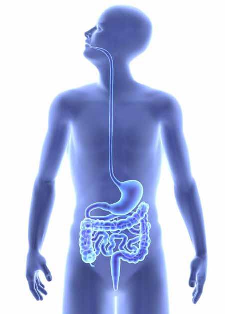 Мицеллы помогают транспортировать липиды в кишечник для поглощения.