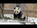 【Panda Billboard】Episode 87 | iPanda