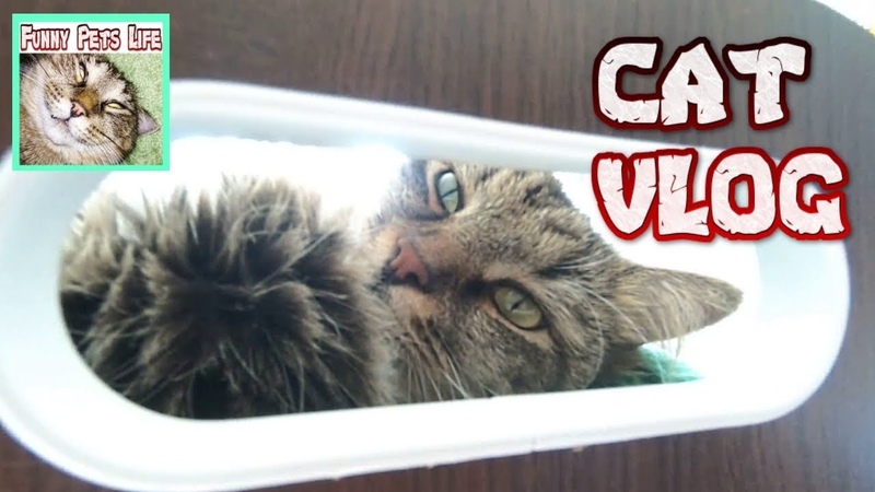 Cat Vlogs Cats are resting Cat and baby The cat enjoys the air