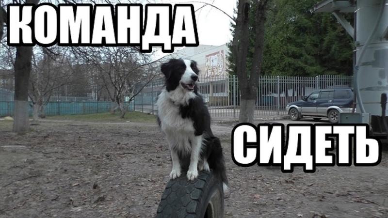 КАК НАУЧИТЬ СОБАКУ КОМАНДЕ СИДЕТЬ Два простых способа Дрессировка собак