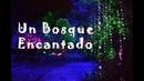 Un Bosque Encantado en Quito RinconcitosDeEcuador Iva
