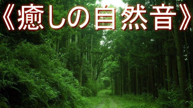 《癒しの自然音》 ヒグラシ の鳴き声 日暮れ時の森林  リフレッシュ・ストレス解消・リラックス・安らぎ