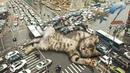 ПРИКОЛЫ С КОТАМИ ДО СЛЕЗ- Смешные Коты и Кошки 2019 Выпуск 2