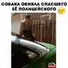 """Вдохновляющие Видео on Instagram: """"Полицейский помог собаке освободиться. Побольше добрый людей в наш мир!"""""""