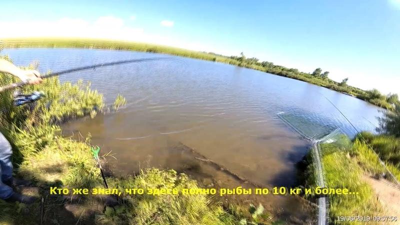 КУДА ПОЕХАТЬ НА РЫБАЛКУ? Ледово 19 06 2019 платная рыбалка / Отчет о рыбалке (фидер, карп)