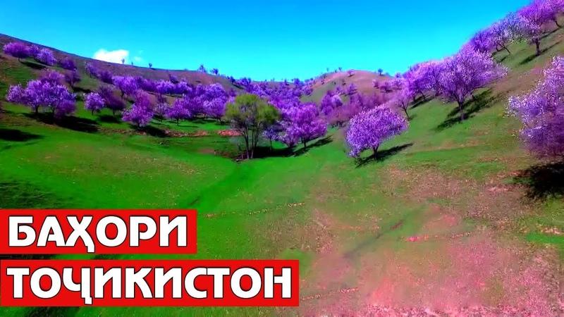 Тоҷикистон, сабзмарзи гулсириштам... / Tajikistan Nature