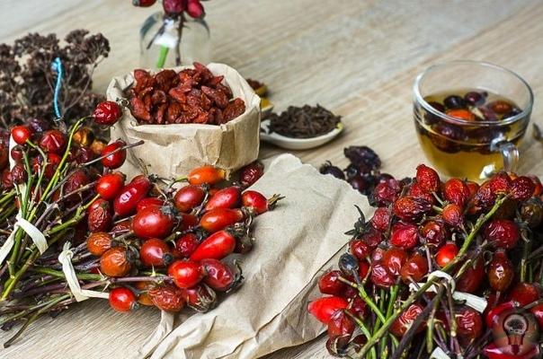 30 народных рецептов из шиповника