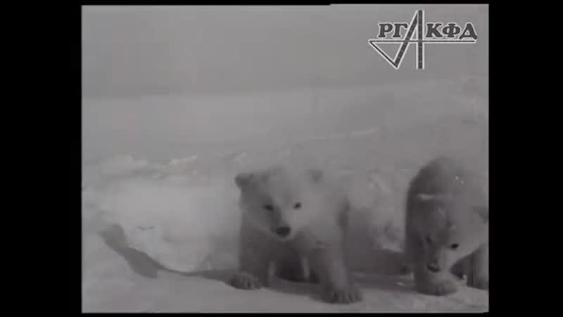 Приключения двух медвежат