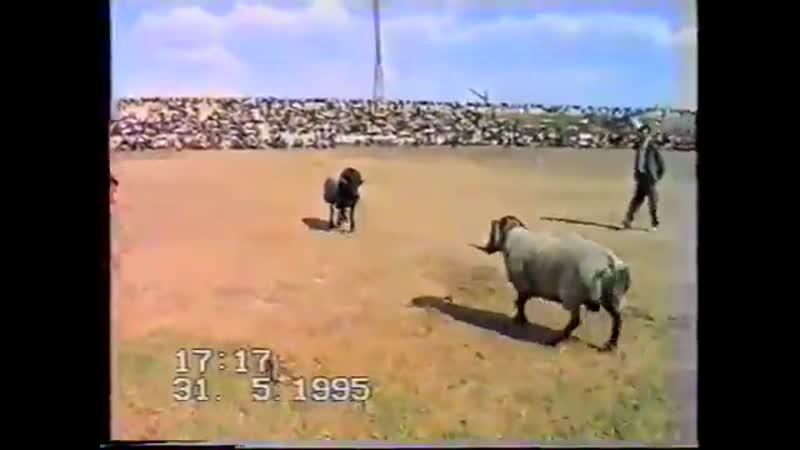Беруни шамал архив 1995 год Topik