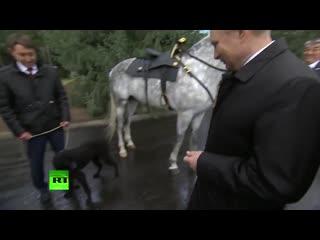 Путина в Киргизии познакомили с орловским скакуном и щенком породы среднеазиатская борзая