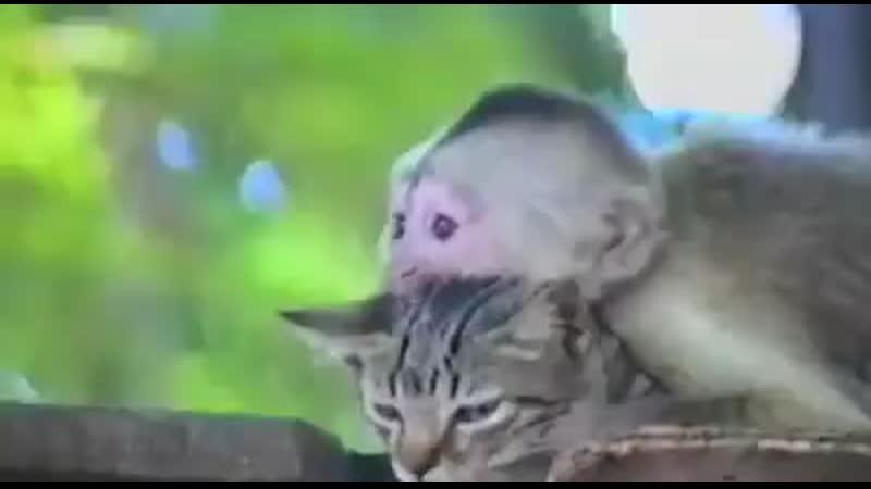Любовь не знает границ..._revolving_hearts_ Кот немного в шоке от происходящего _joy_ ( Source ).mp4