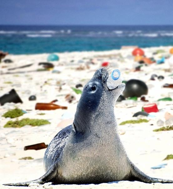 Пластик в океане, или как человек разрушает природу По данным ООН, каждый год в океан попадает около 13 миллионов тонн пластиковых отходов это 80% всего мусора в мировом океане. Пакеты, бутылки,