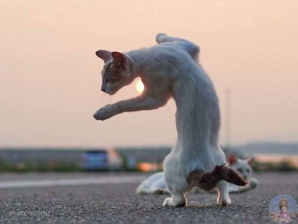 «Ниндзя-кошки» в объективе японского фотографа Хисаката Хироюки