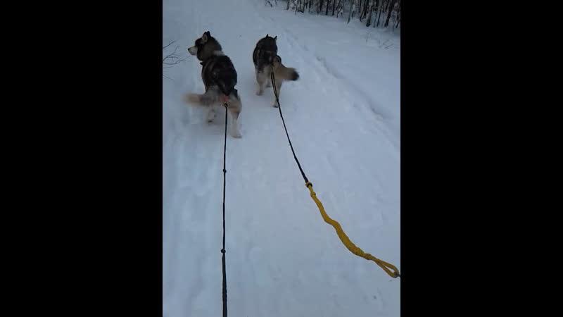 Прогулка в хаски ленд