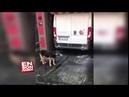 Otomatik Araç Yıkama Makinesine Bedava Masaj Yaptıran Zeki Köpek