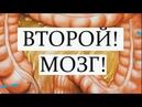 КИШЕЧНИК- ЭТО МОЗГ. ЕДА – это наш иммунитет