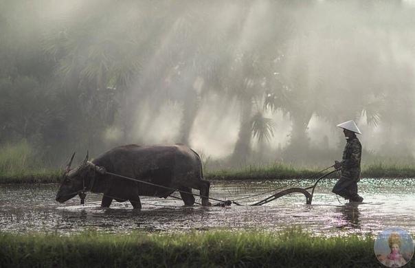 Великолепная Азия в объективе Саравута Интароба