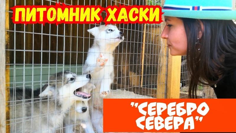 Питомник Хаски Серебро Севера. Деревня ездовых собак. Что посмотреть в Самарской области