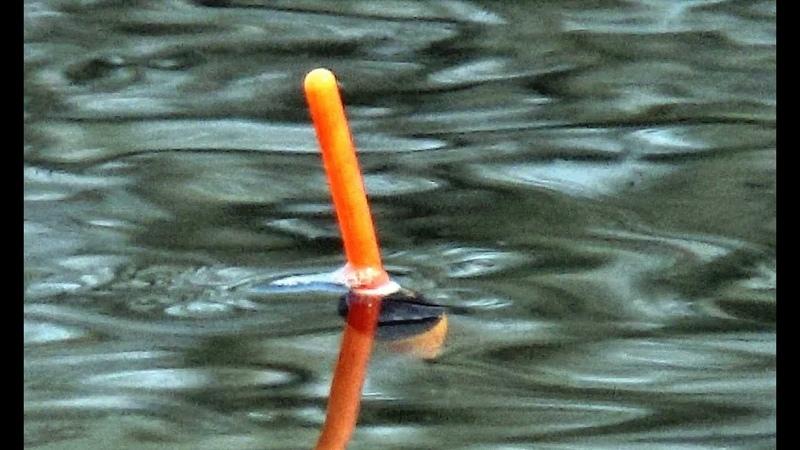 КАК ОН ПОВЕЛ ВЕСЕННИЙ КАРАСЬ 2019 НА ПОПЛАВОК Carp fishing rod fishing