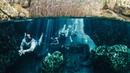 Mayan Ruins Hidden Cenotes and Flamingos in Mexico