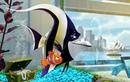 «В поисках Немо» (2003): Тизер 3D-релиза