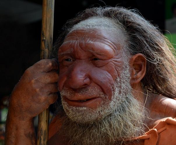 Названа неожиданная причина вымирания неандертальцев