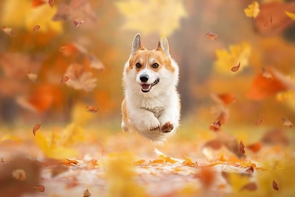 """""""Осенний полет"""""""