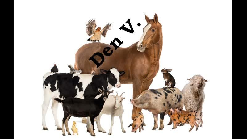 Жизнь собак На что способны собаки Discovery Channel DenV.