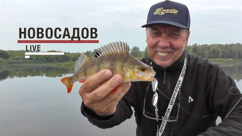 LiveSL N7. Валерий Новосадов. Ловля окуня и жереха на тейл спиннеры и пилькеры.