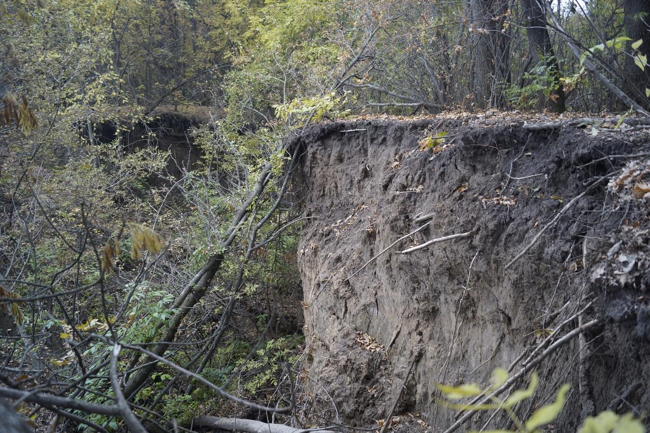 В Курской области появился ещё один памятник природы