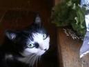Суровые будни кошки Лисы - 1. The harsh everyday life of a cat of a Fox - 1