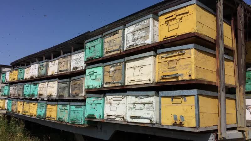 ПРОДАЮ пчеловодный павильон на 90 пчелосемей в Казахстане