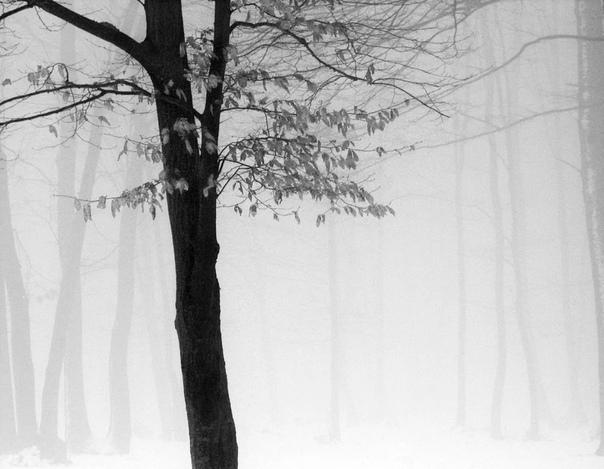 Андрей Бачу убеждён, что нет барьера между фотографией и поэзией
