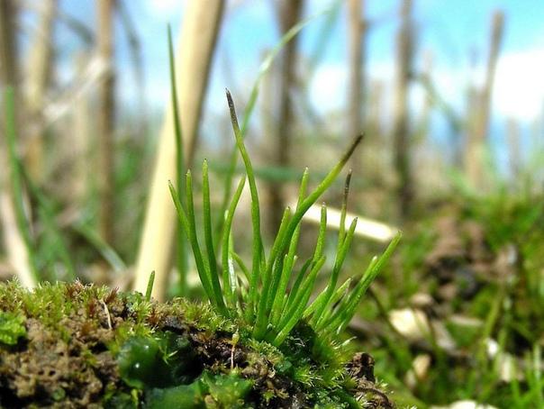 Генетическая особенность древнего растения поможет увеличить урожайность сельскохозяйственных культур