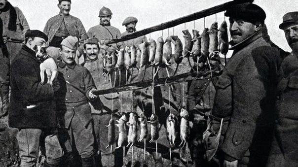 Траншейные крысы, убитые терьером (Первая Мировая война, 1916 год)