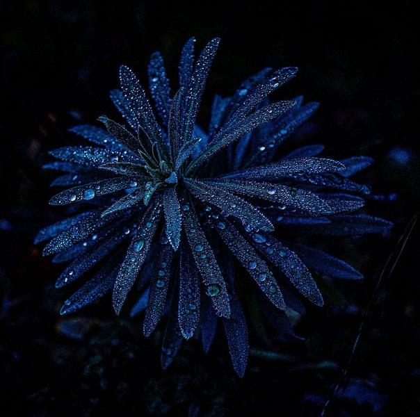 «Природа во тьме, цветок ранним утром на вершине горы в парке»