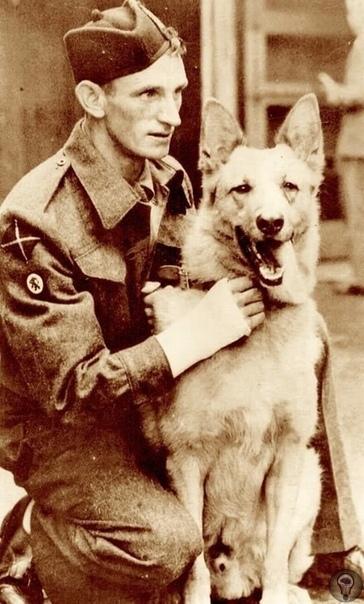 Немецкая овчарка по кличке Стрелок Хан служила во время Второй мировой войны на стороне Британских войск В ноябре 1944 года во время высадки на один из островов Нидерландов, лодка, в которой