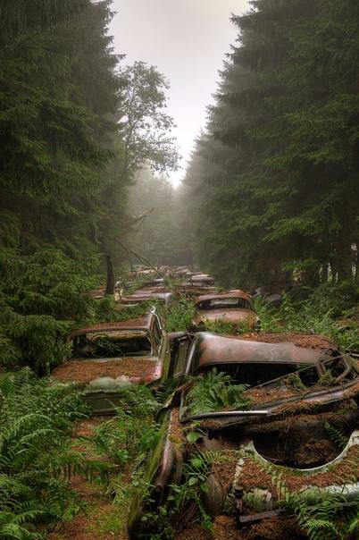 Навечно застывшая пробка в лесу (Бельгия)
